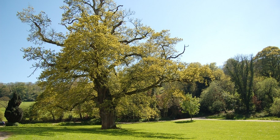 looking across the lawn of Lupton House